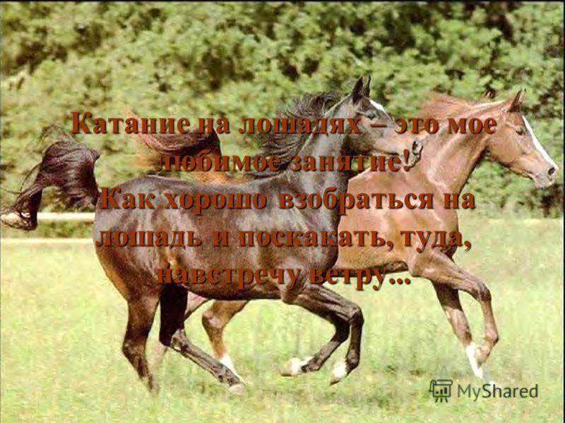 Катание на лошадях – это мое любимое занятие! Как хорошо взобраться на лошадь и поскакать, туда, навстречу ветру...