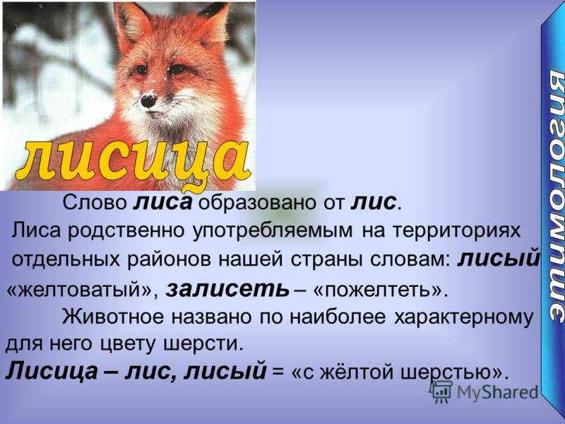 Слово лиса образовано от лис. Лиса родственно употребляемым на территориях отдельных районов нашей страны словам: лисый – «желтоватый», залисеть – «пожелтеть». Животное названо по наиболее характерному для него цвету шерсти. Лисица – лис, лисый = «с