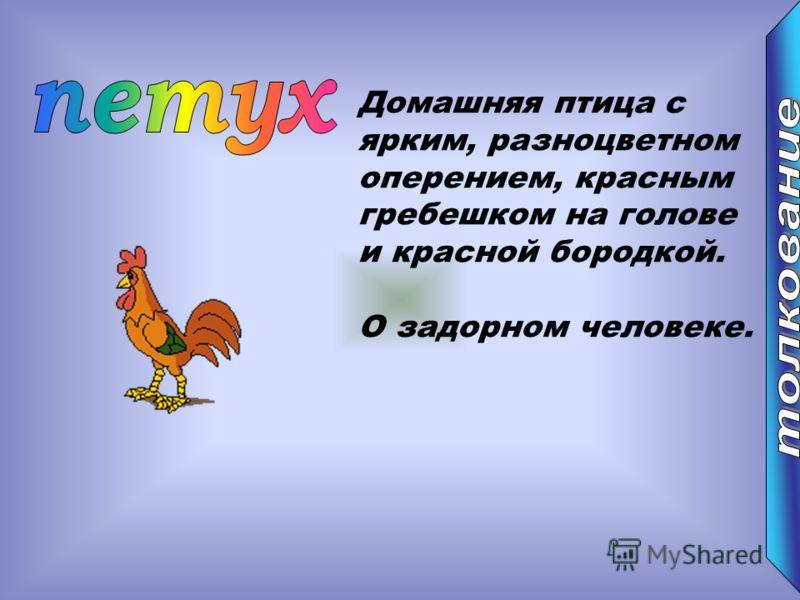 Домашняя птица с ярким, разноцветном оперением, красным гребешком на голове и красной бородкой. О задорном человеке.