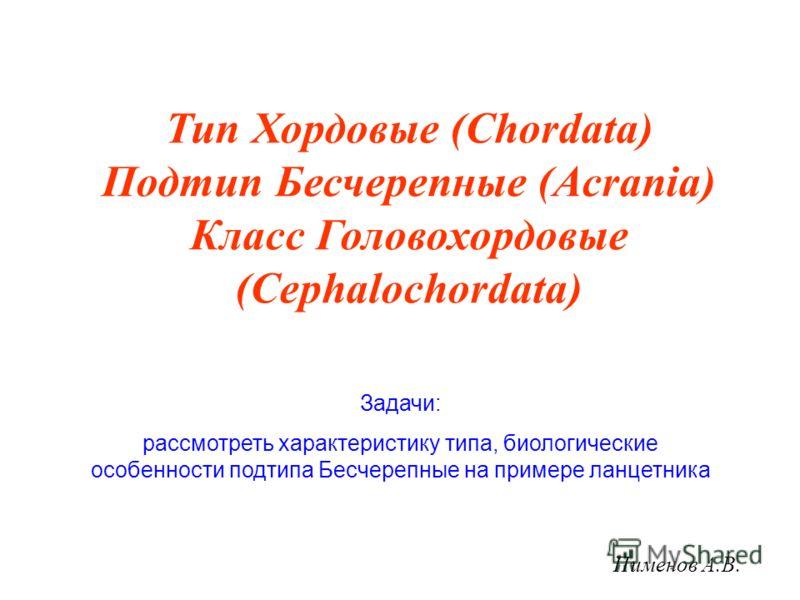 Тип Хордовые (Chordata) Подтип Бесчерепные (Acrania) Класс Головохордовые (Cephalochordata) Задачи: рассмотреть характеристику типа, биологические особенности подтипа Бесчерепные на примере ланцетника Пименов А.В.