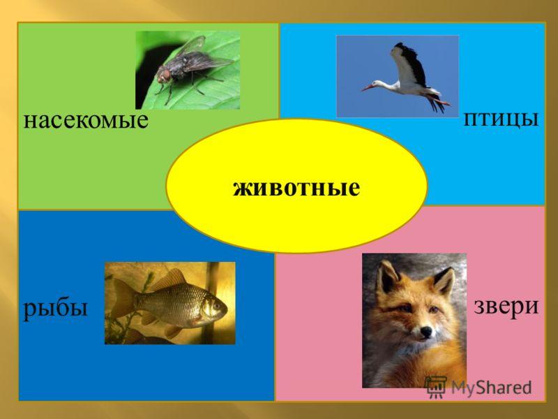 насекомые птицы рыбы звери животные