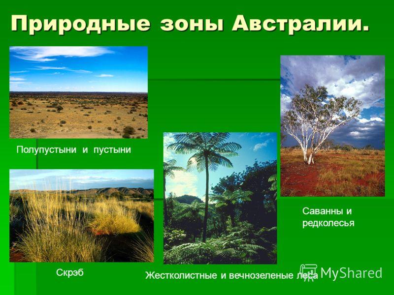 Природные зоны Австралии. Скрэб Саванны и редколесья Жестколистные и вечнозеленые леса Полупустыни и пустыни