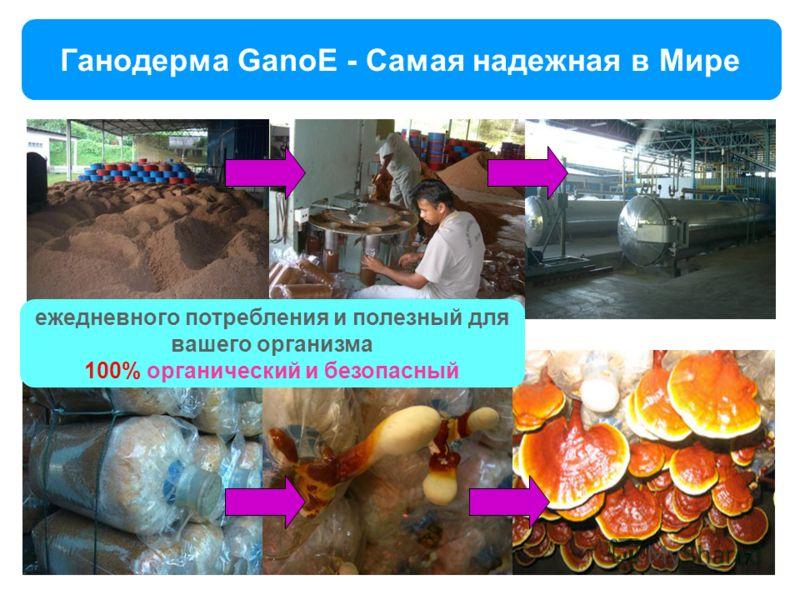 Ганодерма GanoE - Самая надежная в Мире ежедневного потребления и полезный для вашего организма 100% органический и безопасный 17