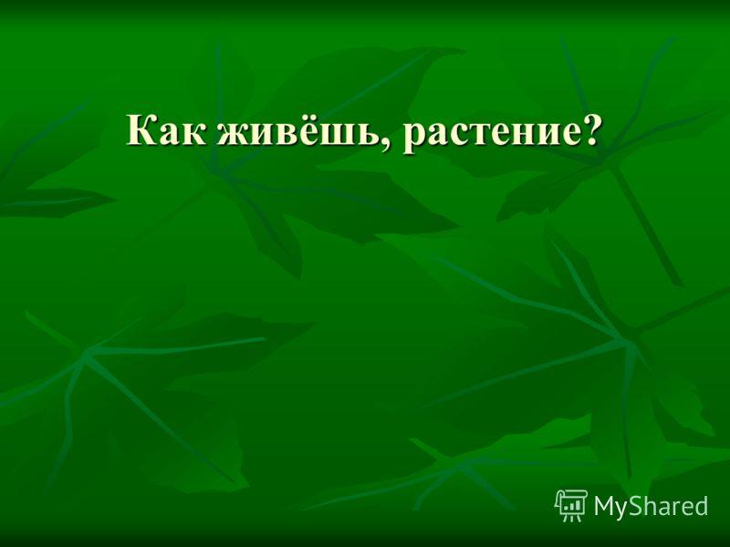 Как живёшь, растение?