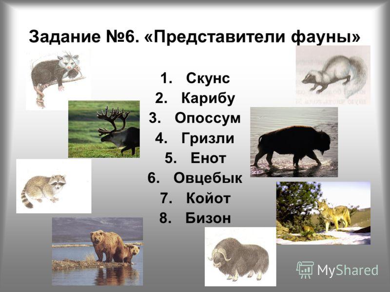 1.Скунс 2.Карибу 3.Опоссум 4.Гризли 5.Енот 6.Овцебык 7.Койот 8.Бизон Задание 6. «Представители фауны»