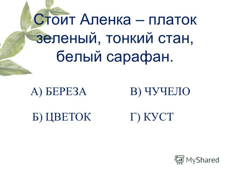 Стоит Аленка – платок зеленый, тонкий стан, белый сарафан. А) БЕРЕЗА Б) ЦВЕТОК В) ЧУЧЕЛО Г) КУСТ