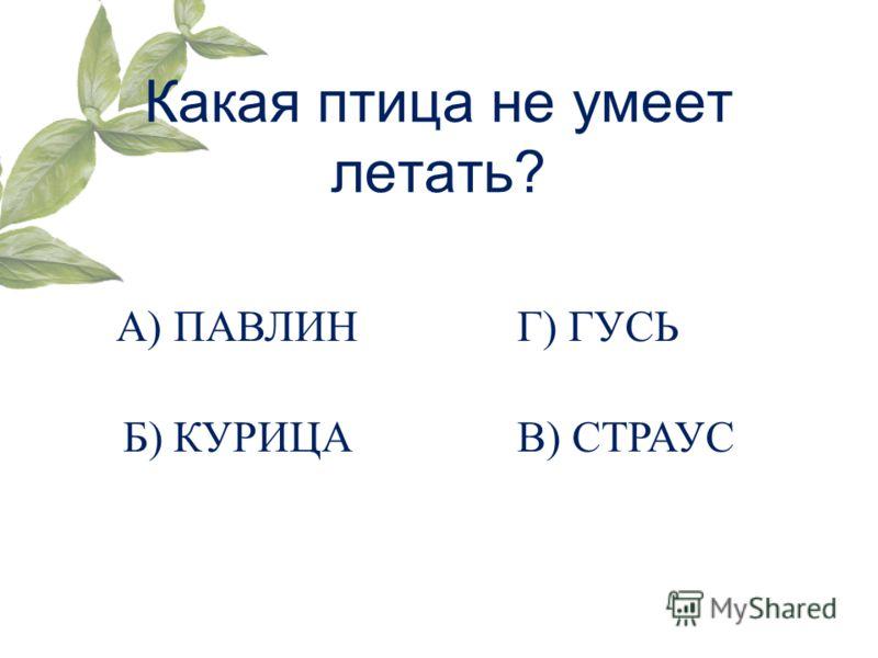 Какая птица не умеет летать? Г) ГУСЬА) ПАВЛИН Б) КУРИЦАВ) СТРАУС