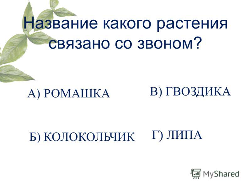 Название какого растения связано со звоном? А) РОМАШКА Б) КОЛОКОЛЬЧИК В) ГВОЗДИКА Г) ЛИПА