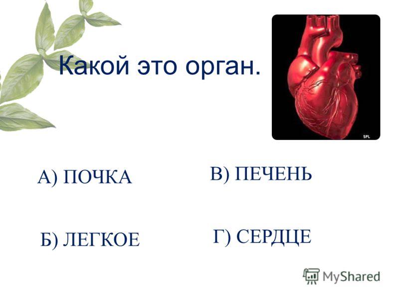 Какой это орган. А) ПОЧКА Б) ЛЕГКОЕ В) ПЕЧЕНЬ Г) СЕРДЦЕ