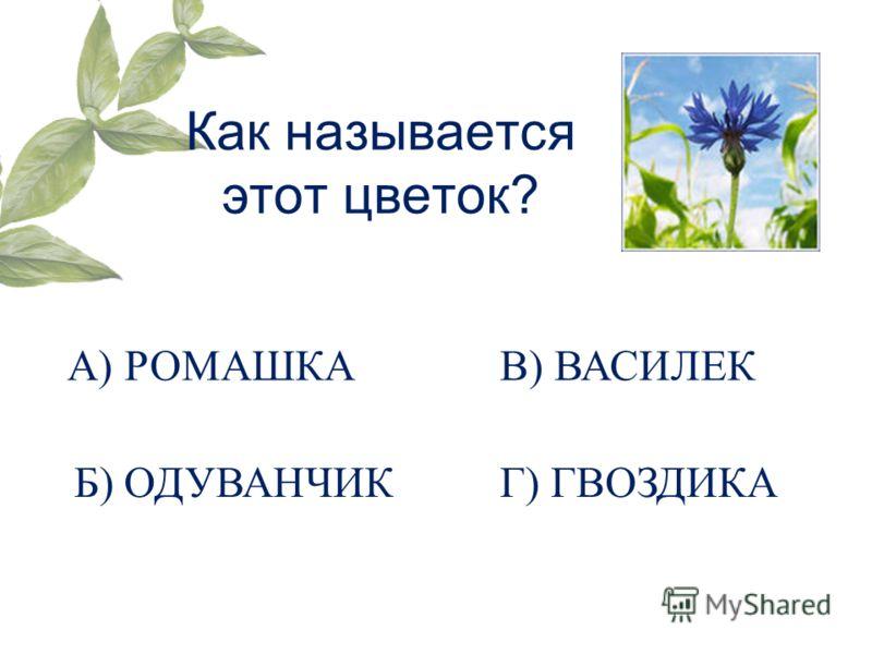Как называется этот цветок? А) РОМАШКА Б) ОДУВАНЧИК В) ВАСИЛЕК Г) ГВОЗДИКА