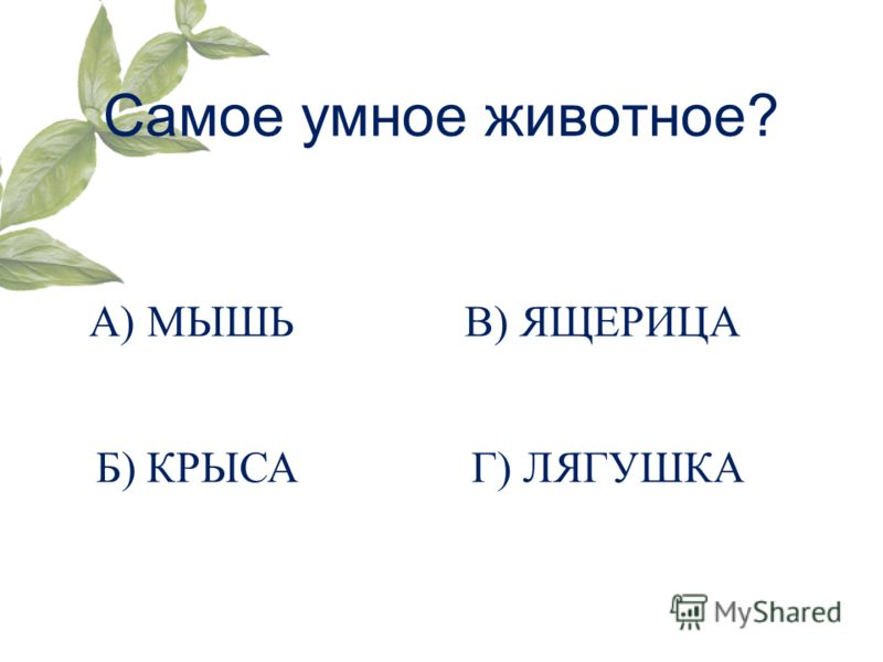 Самое умное животное? А) МЫШЬ Б) КРЫСА В) ЯЩЕРИЦА Г) ЛЯГУШКА