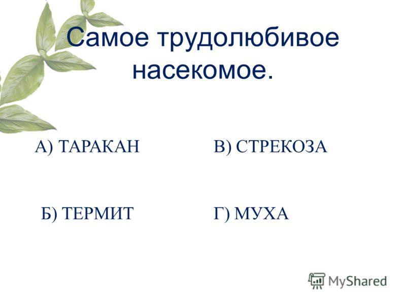 Самое трудолюбивое насекомое. А) ТАРАКАН Б) ТЕРМИТ В) СТРЕКОЗА Г) МУХА