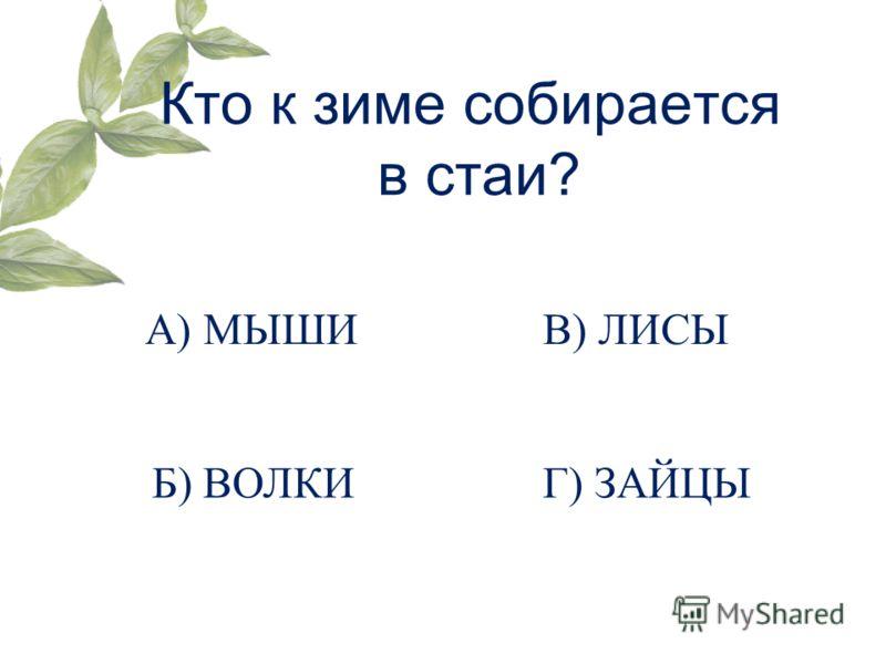 Кто к зиме собирается в стаи? А) МЫШИ Б) ВОЛКИ В) ЛИСЫ Г) ЗАЙЦЫ