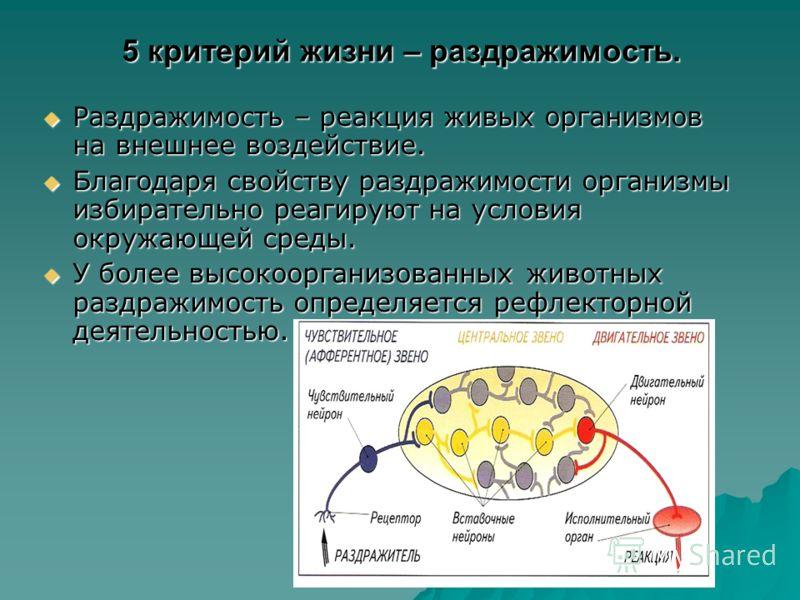 5 критерий жизни – раздражимость. Раздражимость – реакция живых организмов на внешнее воздействие. Раздражимость – реакция живых организмов на внешнее воздействие. Благодаря свойству раздражимости организмы избирательно реагируют на условия окружающе