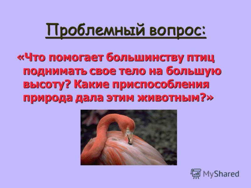 Проблемный вопрос: «Что помогает большинству птиц поднимать свое тело на большую высоту? Какие приспособления природа дала этим животным?» «Что помогает большинству птиц поднимать свое тело на большую высоту? Какие приспособления природа дала этим жи
