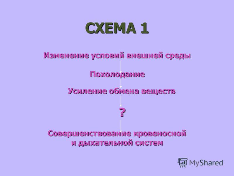 СХЕМА 1 Изменение условий внешней среды Похолодание Усиление обмена веществ ? Совершенствование кровеносной и дыхательной систем