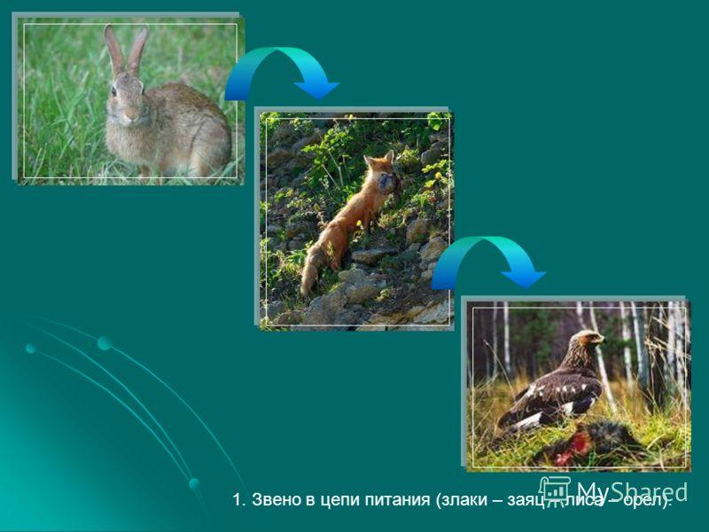 1. Звено в цепи питания (злаки – заяц – лиса – орел).