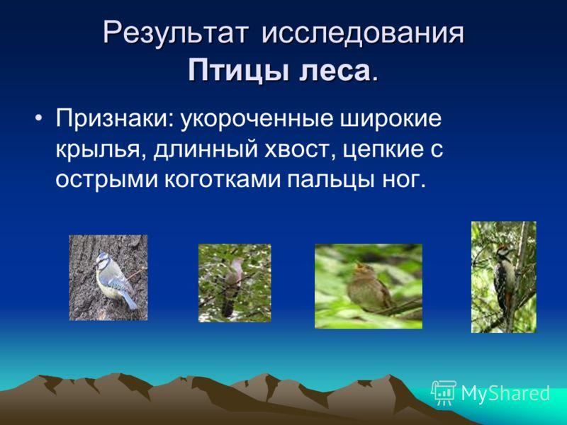 Результат исследования Птицы леса. Признаки: укороченные широкие крылья, длинный хвост, цепкие с острыми коготками пальцы ног.