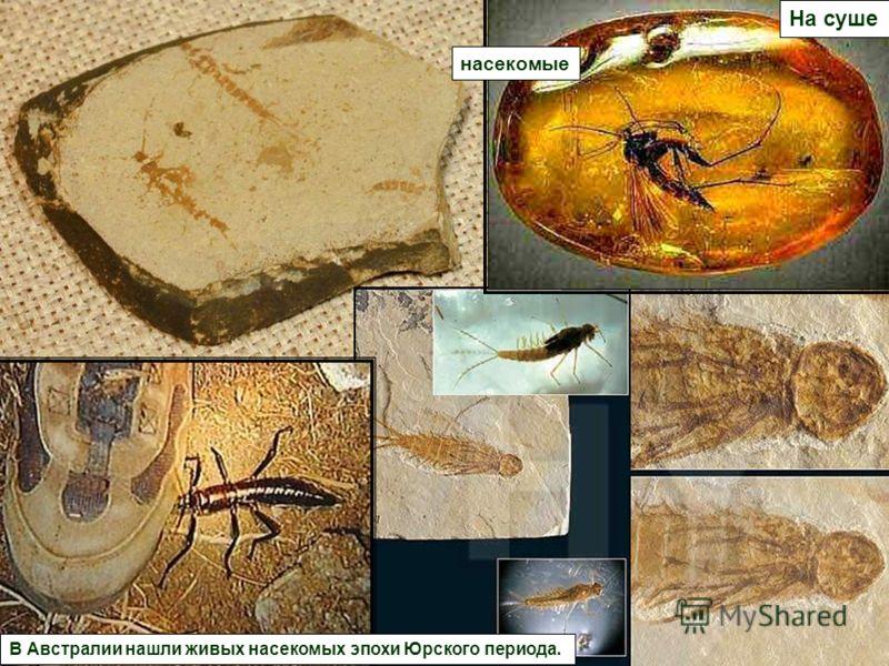 В Австралии нашли живых насекомых эпохи Юрского периода. насекомые На суше