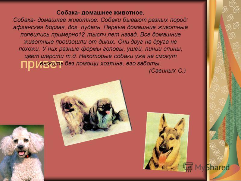 Реферат на тему мой домашний питомец собака 9022