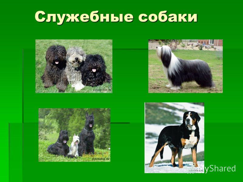 Служебные собаки Служебные собаки