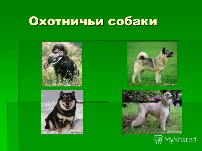 Охотничьи собаки Охотничьи собаки