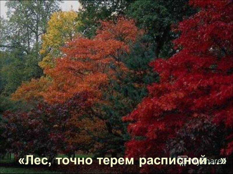 Осенью в лесу очень красиво
