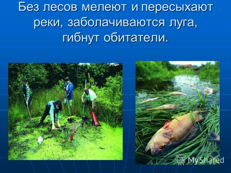 Природоохранительная роль леса: Защищает почву от разрушения. Сохраняет от пересыхания реки и озера Хранит в себе большие запасы воды Лес защищает от ветра поля, луга.