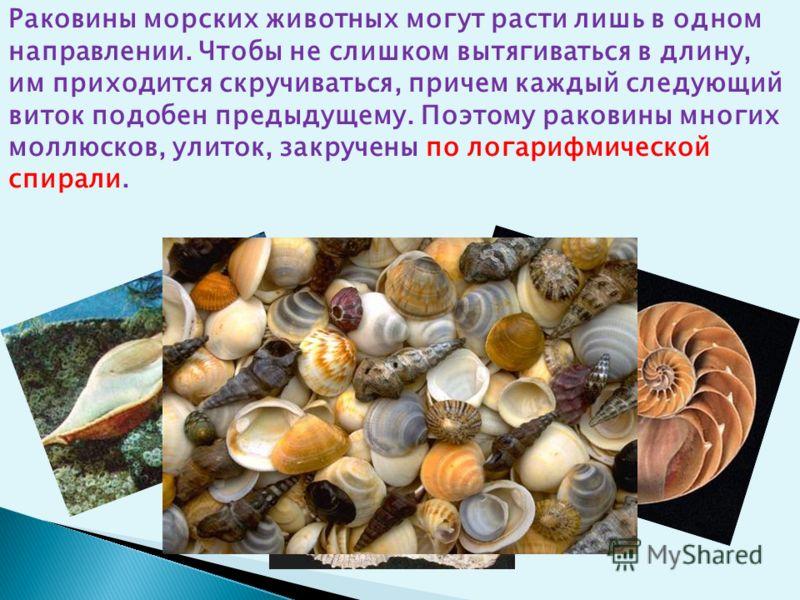 Раковины морских животных могут расти лишь в одном направлении. Чтобы не слишком вытягиваться в длину, им приходится скручиваться, причем каждый следующий виток подобен предыдущему. Поэтому раковины многих моллюсков, улиток, закручены по логарифмичес