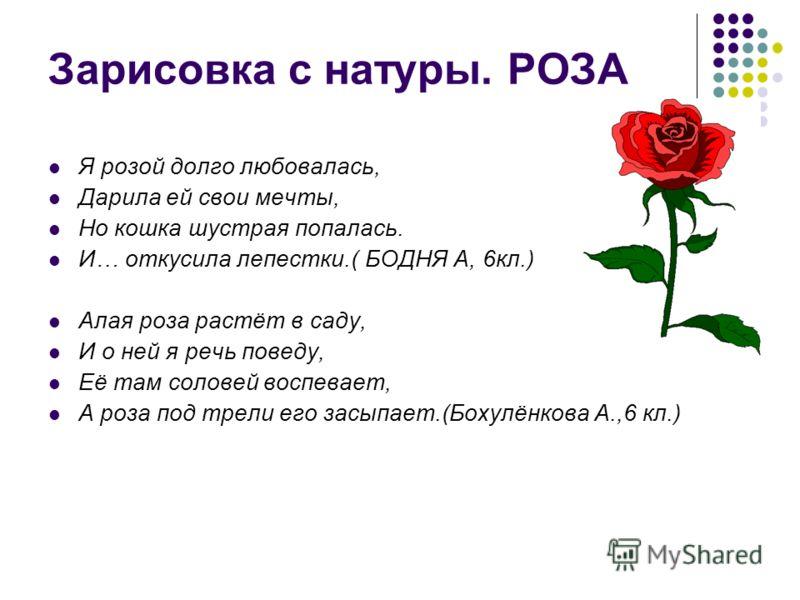 Зарисовка с натуры. РОЗА Я розой долго любовалась, Дарила ей свои мечты, Но кошка шустрая попалась. И… откусила лепестки.( БОДНЯ А, 6кл.) Алая роза растёт в саду, И о ней я речь поведу, Её там соловей воспевает, А роза под трели его засыпает.(Бохулён
