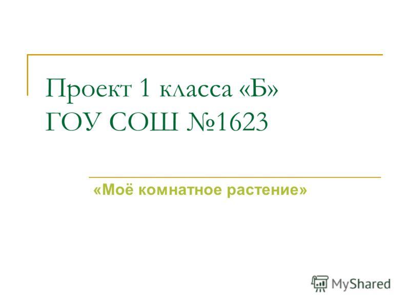 Проект 1 класса «Б» ГОУ СОШ 1623 «Моё комнатное растение»
