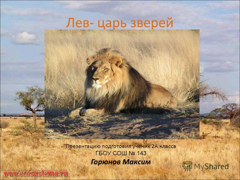 Лев- царь зверей Презентацию подготовил ученик 2А класса ГБОУ СОШ 143 Горюнов Максим