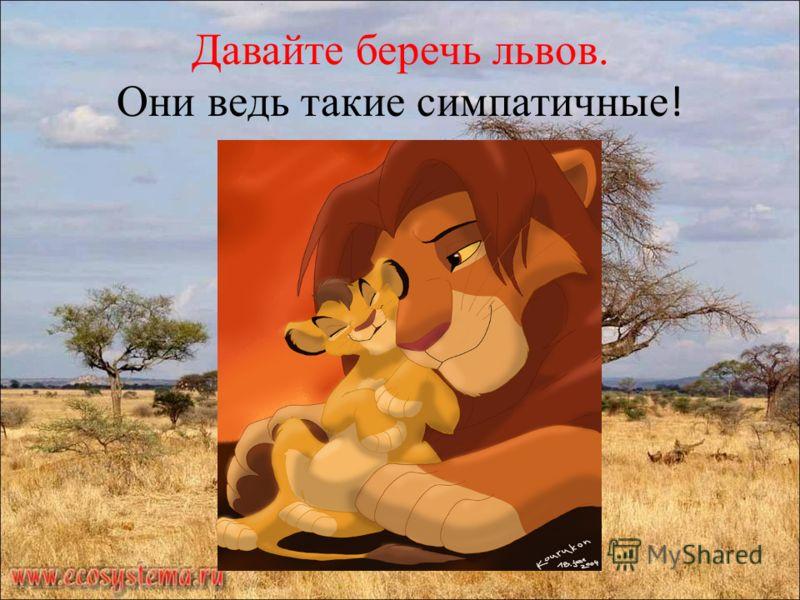 Давайте беречь львов. Они ведь такие симпатичные !