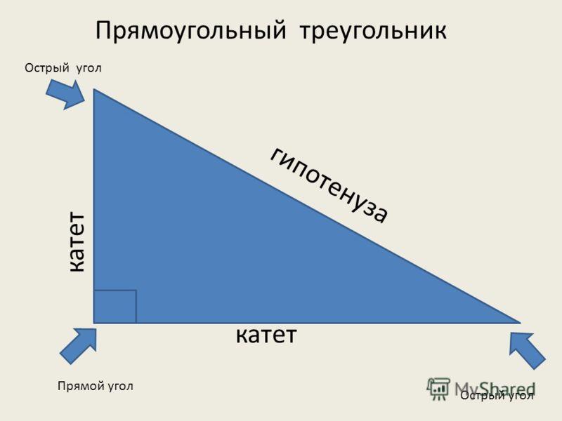 катет гипотенуза Прямоугольный треугольник Прямой угол Острый угол