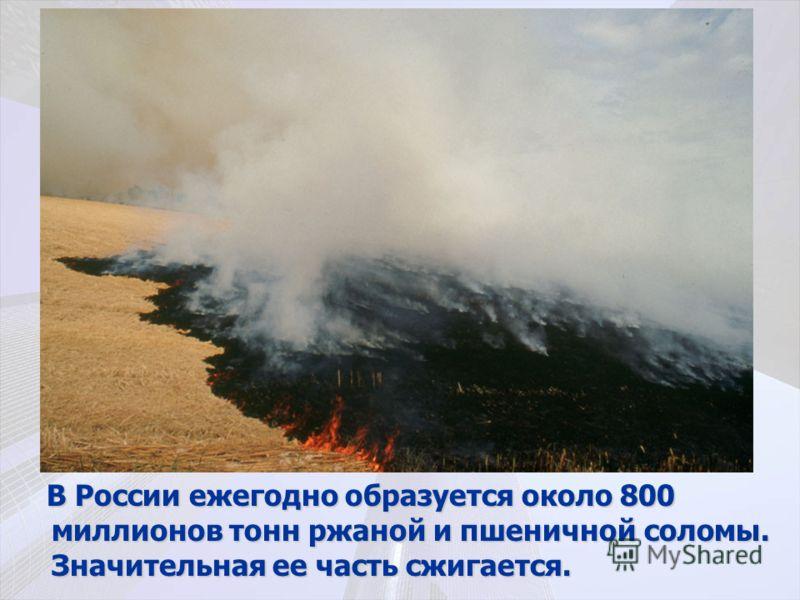 В России ежегодно образуется около 800 миллионов тонн ржаной и пшеничной соломы. Значительная ее часть сжигается. В России ежегодно образуется около 800 миллионов тонн ржаной и пшеничной соломы. Значительная ее часть сжигается.