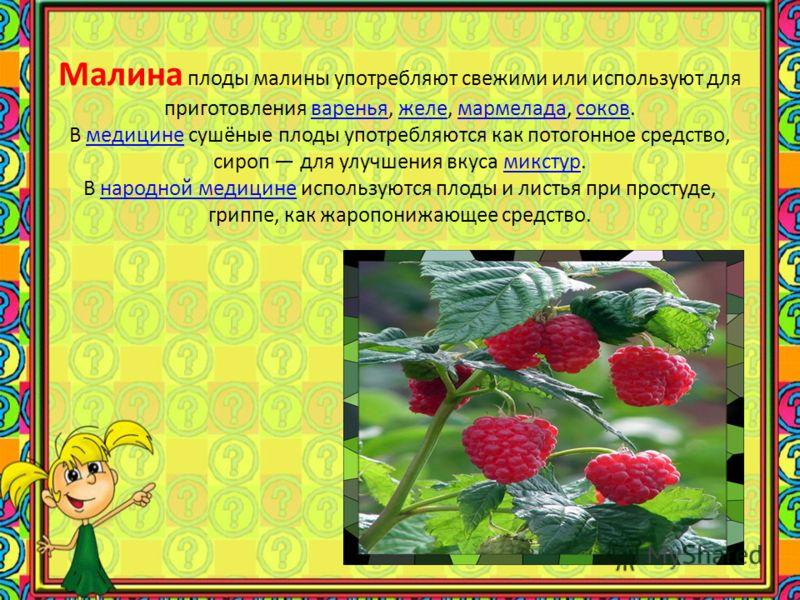 Крыжовник обыкновенный является одним из основных ягодных кустарников, благодаря тому, что его ягоды содержат много сахаров, кислот и различных витаминов. Плоды употребляются в пищу свежими или используются для приготовления варенья, киселей, мармела