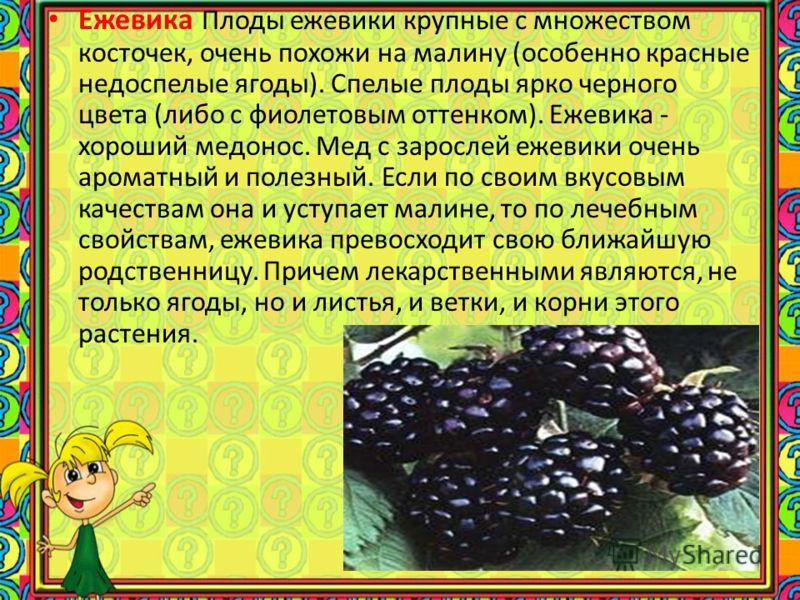 Облепиха плоды съедобные, используются для получения облепихового масла, применяемого в медицине. Листья облепихи служат дубильным сырьём. Плоды являются важной составляющей частью зимней пищи некоторых птиц, например, рябинника.облепихового масладуб