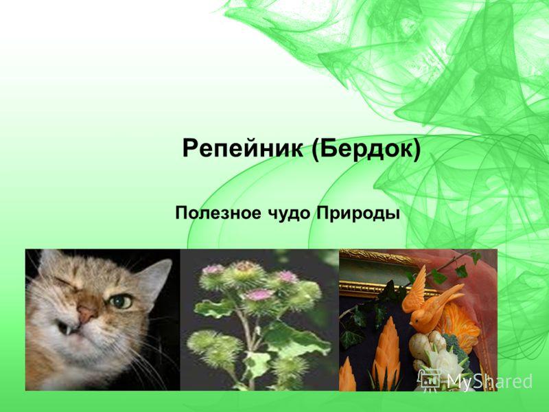 Репейник (Бердок) Полезное чудо Природы