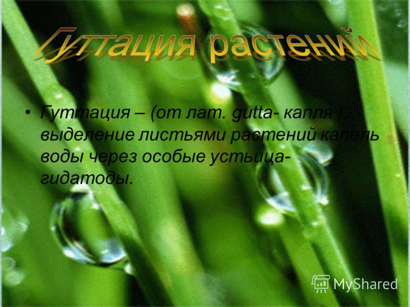 Гуттация – (от лат. gutta- капля ), выделение листьями растений капель воды через особые устьица- гидатоды.