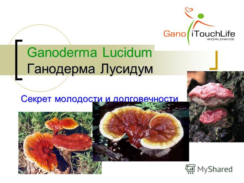Ganoderma Lucidum Ганодерма Лусидум Секрет молодости и долговечности