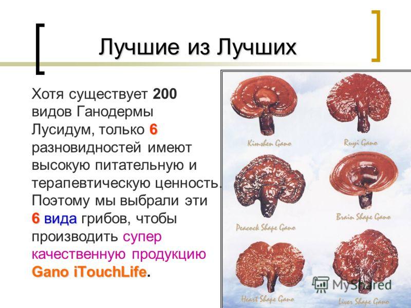 15 Лучшие из Лучших Лучшие из Лучших 6 6вида Gano iTouchLife Хотя существует 200 видов Ганодермы Лусидум, только 6 разновидностей имеют высокую питательную и терапевтическую ценность. Поэтому мы выбрали эти 6 вида грибов, чтобы производить супер каче