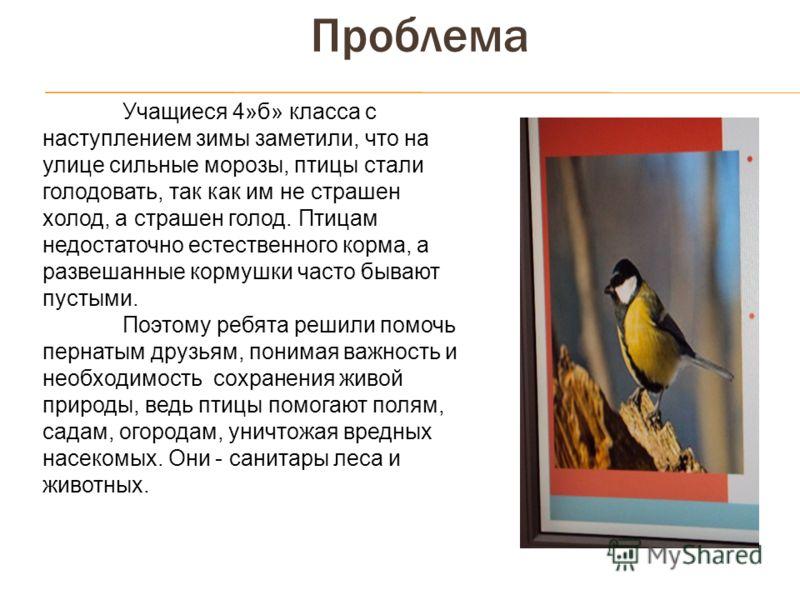 Проблема Учащиеся 4»б» класса с наступлением зимы заметили, что на улице сильные морозы, птицы стали голодовать, так как им не страшен холод, а страшен голод. Птицам недостаточно естественного корма, а развешанные кормушки часто бывают пустыми. Поэто