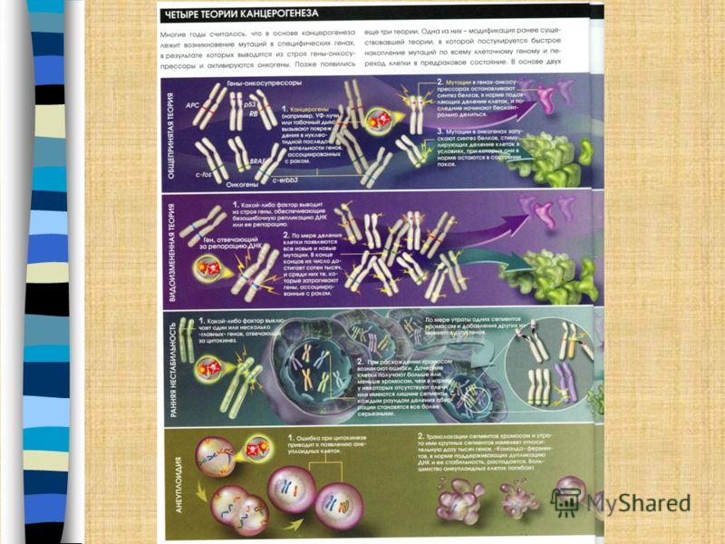 История Фрэнк Макферлайн Бёрнет (Burnet), (3 сентября 1899 г. – 31 августа 1985 г.), австралийский иммунолог. Считал, что главная роль иммунной системы заключается в сохранении генетического постоянства клеток организма. Фрэнк Макферлайн Бёрнет (Burn