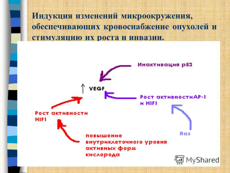 Индукция изменений микроокружения, обеспечивающих кровоснабжение опухолей и стимуляцию их роста и инвазии. Ангиогенез Ключевая роль в этом процессе принадлежит VEGF и ангиопоэтину-2а, также bFGF, PLGF, PD-EGF и некоторым другим митогенным/мотогенным