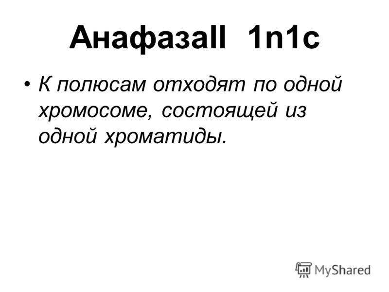 АнафазаII 1n1c К полюсам отходят по одной хромосоме, состоящей из одной хроматиды.