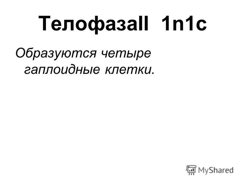 ТелофазаII 1n1c Образуются четыре гаплоидные клетки.