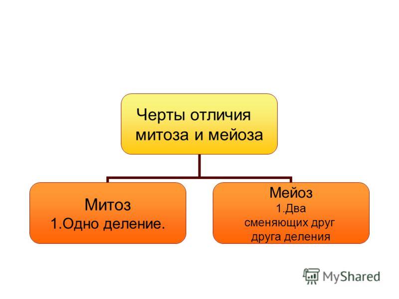 Черты отличия митоза и мейоза Митоз 1.Одно деление. Мейоз 1.Два сменяющих друг друга деления