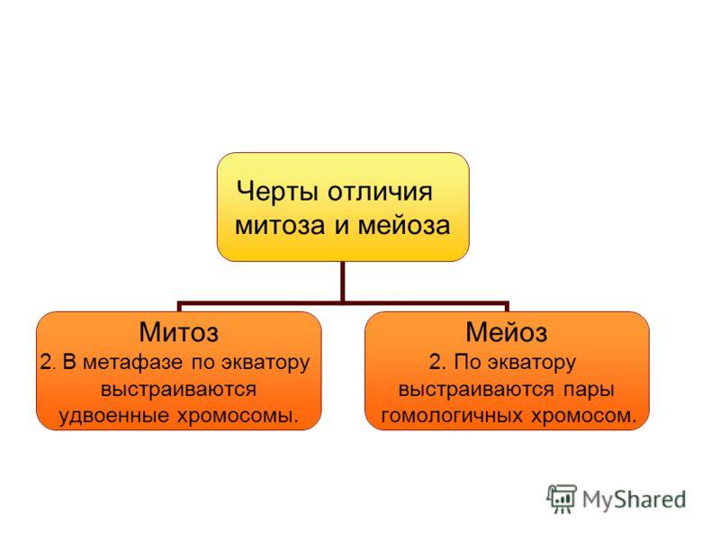 Черты отличия митоза и мейоза Митоз 2. В метафазе по экватору выстраиваются удвоенные хромосомы. Мейоз 2. По экватору выстраиваются пары гомологичных хромосом.