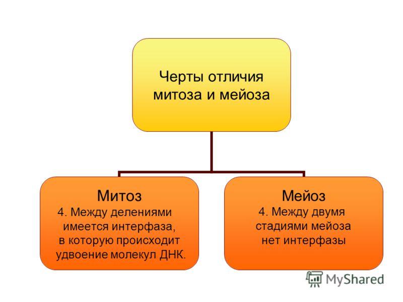 Черты отличия митоза и мейоза Митоз 4. Между делениями имеется интерфаза, в которую происходит удвоение молекул ДНК. Мейоз 4. Между двумя стадиями мейоза нет интерфазы
