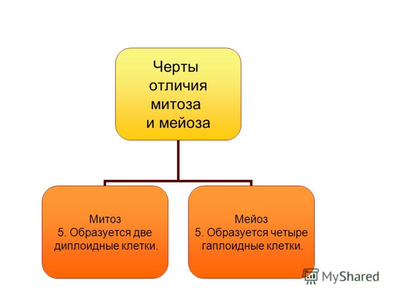 Черты отличия митоза и мейоза Митоз 5. Образуется две диплоидные клетки. Мейоз 5. Образуется четыре гаплоидные клетки.